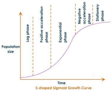 Image result for sigmoid growth curve labeled