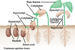 germination-altered